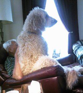 Max watching tv