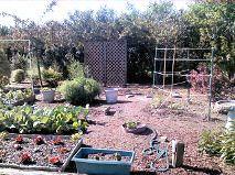 whole garden